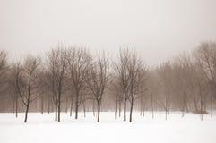 Nevelig de winterlandschap Stock Foto's