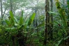 Nevelig, Dicht, Weelderig Tropisch Regenwoud in Costa Rica stock fotografie