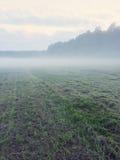 Nevelig gebied met vers gemaaid gras Stock Fotografie