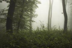 Nevelig groen hout met griezelige mist stock foto's