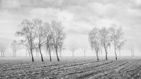 Nevelig landbouwlandschap met mooie gevormde wilgen op een bevroren gebied, Rafels, België royalty-vrije stock afbeeldingen