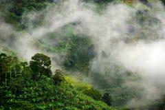 Nevelig landschap in Buenavista, Quindio stock foto