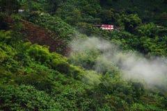 Nevelig landschap in Buenavista, Quindio royalty-vrije stock afbeelding