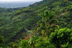 Nevelig landschap in Buenavista, Quindio stock foto's