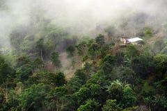 Nevelig landschap in Buenavista, Quindio stock afbeelding