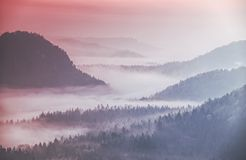 Nevelig mouintainbos met zuivere overzichten Treetops in mist royalty-vrije stock fotografie