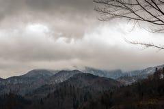 Nevelig mystiek bos op heuvelige bergen stock foto's