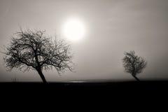 Nevelig silhouet van twee bomen Stock Afbeeldingen
