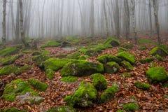 Nevelig, uitgestrooid met de bemoste helling van de keienberg in het bos van de de herfstbeuk royalty-vrije stock afbeelding