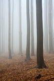 Nevelige atmosfeer in bos royalty-vrije stock afbeeldingen