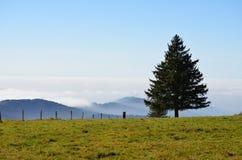 Nevelige bergen in het Zwarte Bos in Duitsland Royalty-vrije Stock Foto's
