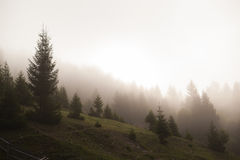 Nevelige bergenkoude Stock Fotografie