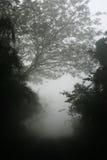 Nevelige bomen Stock Foto's
