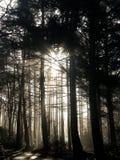 Nevelige bomen 2 Royalty-vrije Stock Foto's