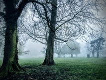 Nevelige bomen royalty-vrije stock afbeelding