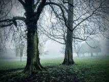 Nevelige bomen royalty-vrije stock foto