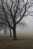 Nevelige bomen Royalty-vrije Stock Foto's