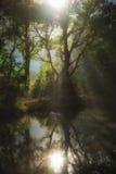 Nevelige bos en vijver met zonnestraal en bezinning royalty-vrije stock afbeeldingen