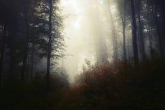 Nevelige bosachtergrond in de herfst royalty-vrije stock afbeelding