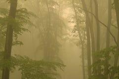 Nevelige bosbomen Stock Afbeeldingen