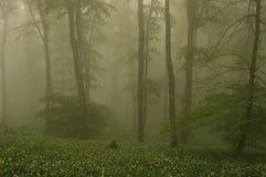Nevelige bosbomen Stock Fotografie