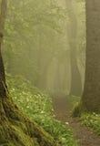 Nevelige bosweg Royalty-vrije Stock Fotografie