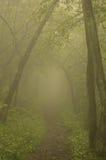 Nevelige bosweg Stock Foto's