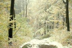 Nevelige dalings bosgang met eerste sneeuw Royalty-vrije Stock Foto