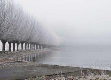 Nevelige de winterbomen met water stock afbeeldingen