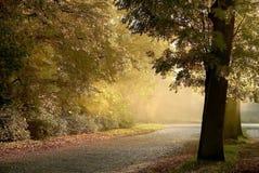 Nevelige landelijke weg door de herfstbomen Royalty-vrije Stock Afbeeldingen