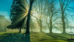 Nevelige ochtend met zonlichten Royalty-vrije Stock Afbeeldingen