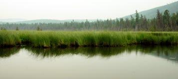 Nevelige ochtend op het meer De vroege zomerochtend motregenende regen Stock Afbeelding