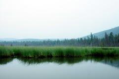 Nevelige ochtend op het meer De vroege zomerochtend motregenende regen Stock Fotografie