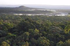 Nevelige ochtend over een regenwoud. Royalty-vrije Stock Afbeelding