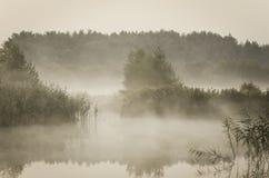 Nevelige ochtend over het meer Stock Afbeeldingen
