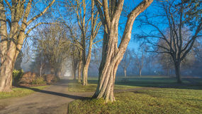 Nevelige ochtend in park Royalty-vrije Stock Foto's