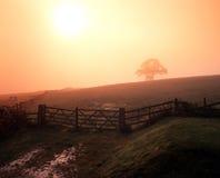 Nevelige ochtend, Staffordshire, Engeland. Stock Afbeelding
