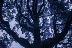 Nevelige takken van bomen in het bos stock fotografie