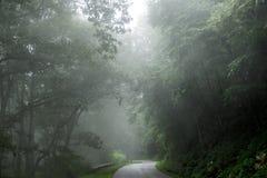 Nevelige treetops in het bos Stock Afbeelding