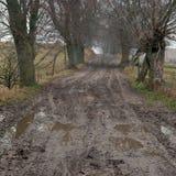 Nevelige weg met wilgen Stock Foto