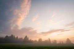 Nevelige weide bij dageraad Royalty-vrije Stock Foto