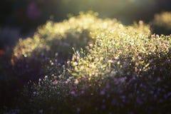 Nevelige weide op de vroege ochtend Abstracte natuurlijke achtergronden Royalty-vrije Stock Foto's