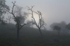 Nevelige zonsopgang in de appelboomgaard stock foto