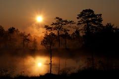 Nevelige zonsopgang in Moeras Viru Royalty-vrije Stock Fotografie