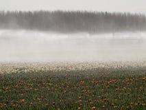Nevelmachine over een tulpengebied Royalty-vrije Stock Fotografie