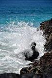 Nevelplons bij rotsachtige kust met blauwe waterachtergrond stock afbeelding