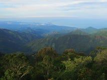 Nevelwoud/Wolkenwald; Santa Marta Mountains, Sierra Nevada, lizenzfreies stockfoto