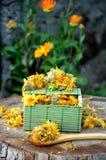 Neven marigold medicinaln planet yellow colpr. Marigold medicinal plant for 100 illnesses usually  inhabits bright suspicions Royalty Free Stock Photo