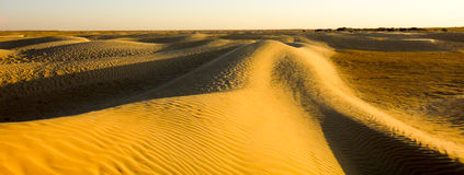 Neverending Sahara desert Royalty Free Stock Photos