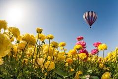 Neverland słońce, kwiaty i balon, Fotografia Stock
